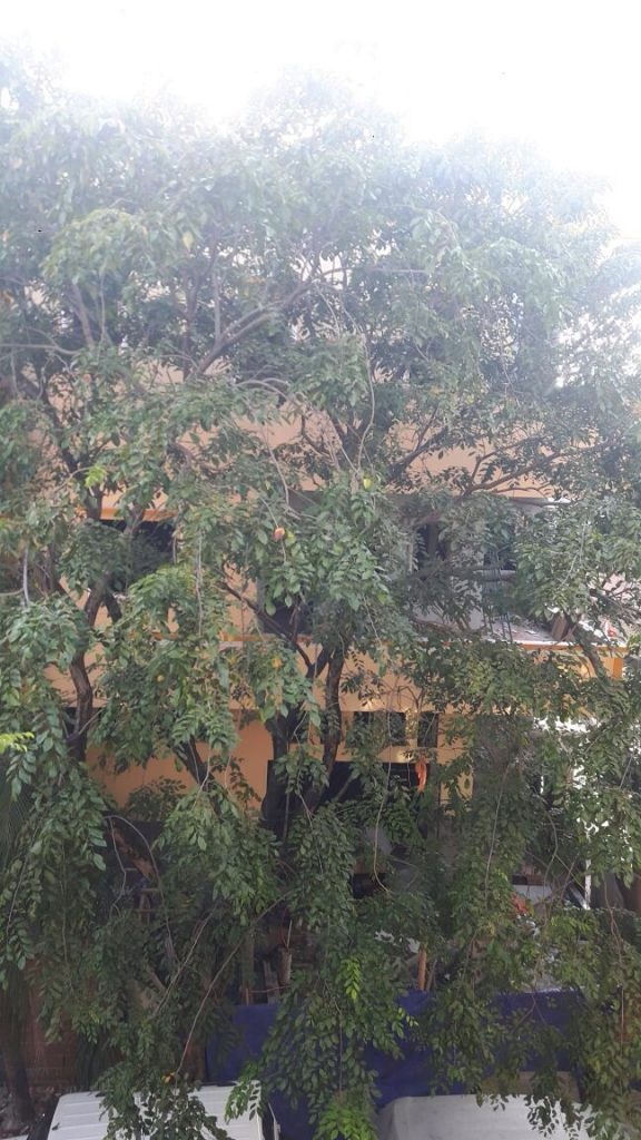 Pohon sebelum ada bangunan