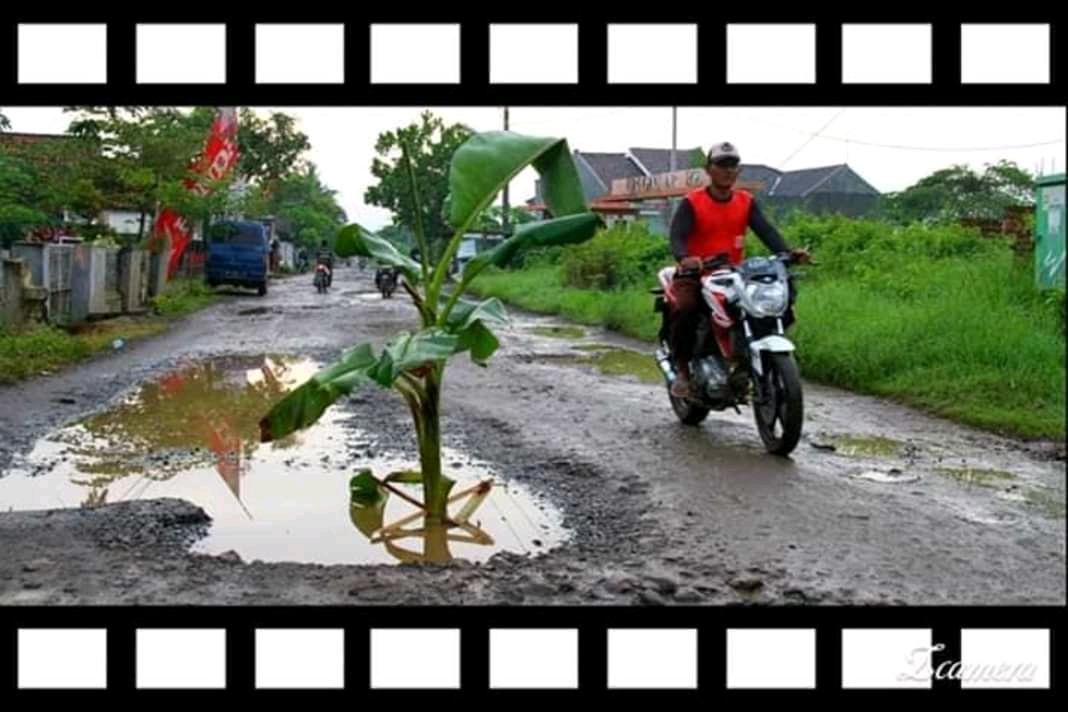 Bentuk kekesalan warga menaruh Batang pisang di jalan yang rusak (FOTO/Tofaz)